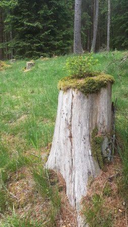 Waldfrieden.jpg